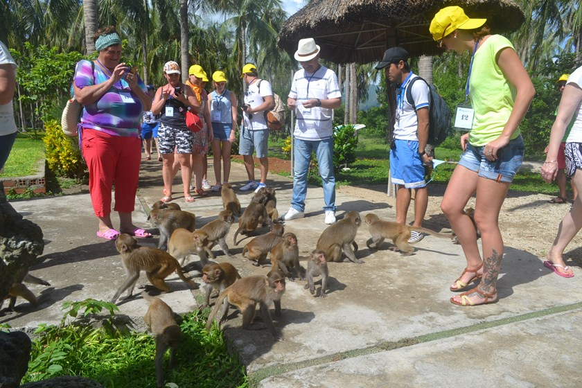 Lao Island outside Nha Trang is home to more than 1,000 monkeys. Photo: Tra Son