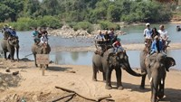 Elephants in Dak Lak Province carry tourists. Photo: Tran Ngoc Quyen