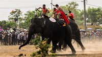 Elephant sports in Vietnam's Central Highlands
