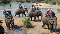 Elephants serving tourists in the Central Highlands province of Dak Lak. Photo: Trung Chuyen