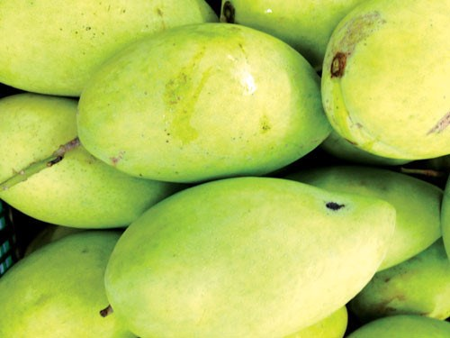 Vietnamese mangoes are going to be exported to Australia. Photo: Minh Khoi