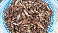 Second victim dies after eating insects in central Vietnam