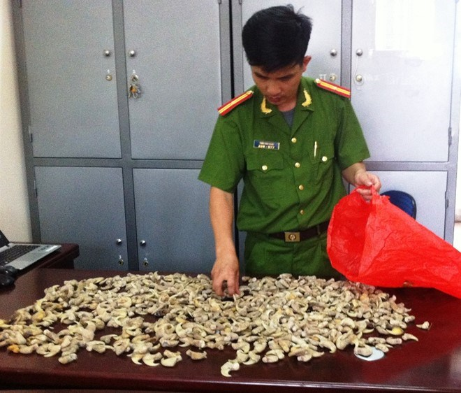 A police officer inspects the claws seized from a man in Nghe An on May 10, 2016. Photo credit: Zing.vn
