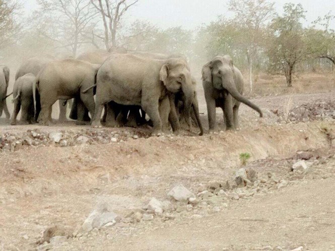 The elephants that have threatened many residents in Dak Lak Province since last week. Photo: Thanh Nien
