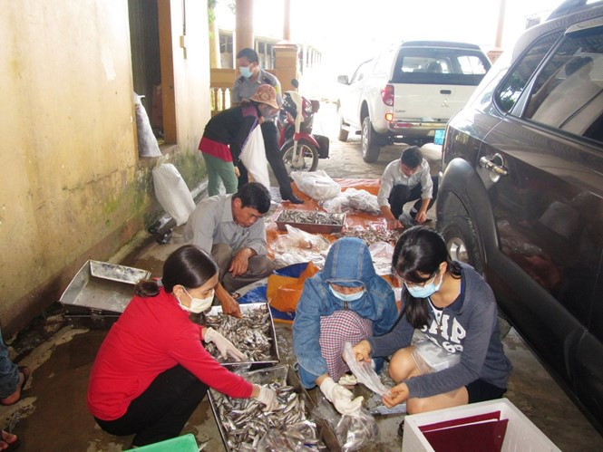 Health inspectors take samples of mackerel scads from a store in Quang Tri Province on JUne 13, 2016. Photo: Thanh Loc/Thanh Nien