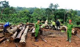 Primary forest cleared illegally in Vietnam