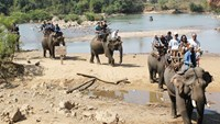 Tourists riding elephants in Dak Lak Province. Photo: Ngoc Quyen
