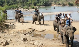 Experts divided on Vietnam elephant-watching tour
