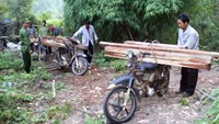 Timber poachers caught in Lam Dong Province on August 10. Photo credit: Tuoi Tre