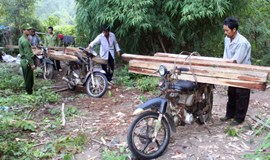 7 illegal loggers arrested in Lam Dong