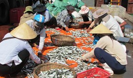 Vietnam central coast safe for swimming, aquaculture after disaster: study