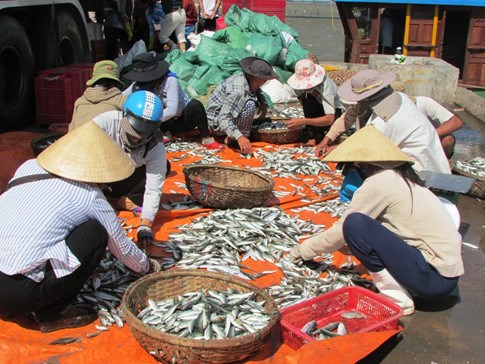Fish sold at a market in central Vietnam. Photo: Nguyen Phuc