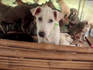 Why the new campaign against dog meat in Vietnam is hypocritical