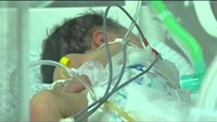 Gaza baby delivered from dying mother