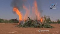 Marijuana up in flames - IS fighters shown burning cannabis field
