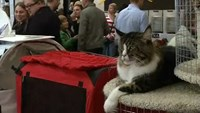 Show cats for sale to fund Ukrainian troops