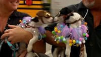 Parade of pretty pups, while Australian animals saved from fire