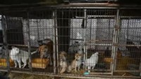 23 dogs bred for meat rescued from South Korea