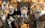 "A roundup of animals on and around Japan's ""Cat Island"""