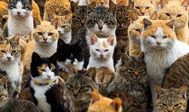 """A roundup of animals on and around Japan's """"Cat Island"""""""