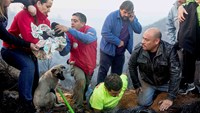 Nine puppies pulled from Chile forest fire 'safe and sound'