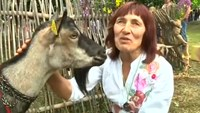 Lithuanian village searches for most glamorous goat