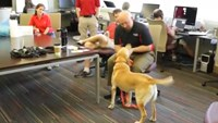 Teaching old dogs new tricks with 'smart harness'