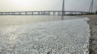 Thousands of dead fish wash up near Tianjin blast site