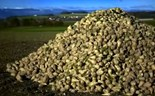 Sugar beet waste product could be billion dollar 'wonder material'