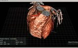 Body parts floating in 3D space to give medicine virtual shape
