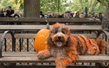 Halloween for the dogs
