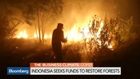 Indonesia seeks funds to restore forests
