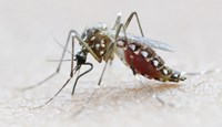 Texas reports case of sexually transmitted Zika virus: official