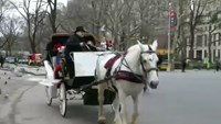 A neigh to horse drawn carriage ban
