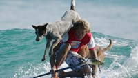 Australian dog trainer surfs with four-legged friends