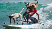 Surfing dogs and 'barking' candidates