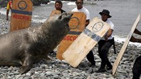 Animals wash up in Peru, specialists blame El Nino