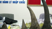 Man caught in Vietnam aiport with 13 kg of rhino horn