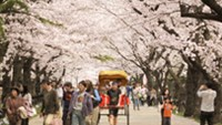 Japan plans to waive visa for Vietnamese tourists: report
