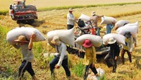 Vietnam rice exports fall due to loss of markets