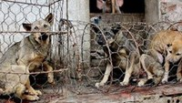 Restauranteur arrested for buying stolen dogs in southern Vietnam