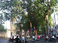 Ho Chi Minh City's authority denies reports on tree-cutting plan