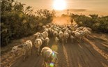 Ninh Thuan: The land of sheep in central Vietnam