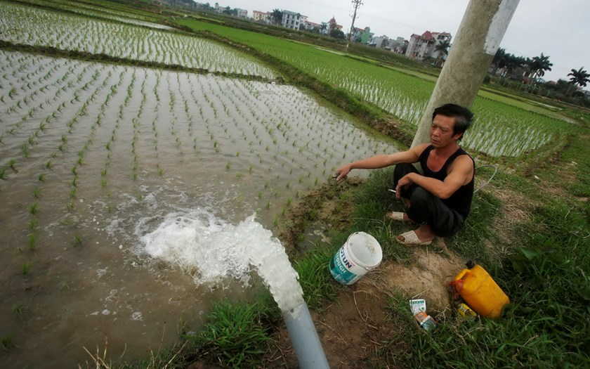 A farmer pumps water to a rice paddy field in Tien Duong village, outside Hanoi. Photo: Reuters