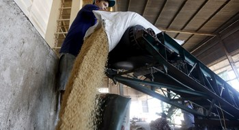 A man works at a rice processing factory in the Mekong delta city of Can Tho. Photo: Reuters