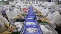 Employees work at Cafatex shrimp and Pangasius Catfish factory in the Mekong Delta province of Hau Giang. Photo: Reuters