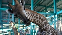 Vietnam's first safari park to open in Phu Quoc next month