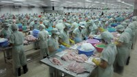 A Vietnamese seafood processing factory. Photo: Chi Nhan