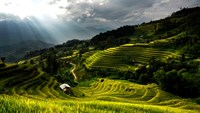 Photo exhibition shows off Vietnam's rice terrace paradise