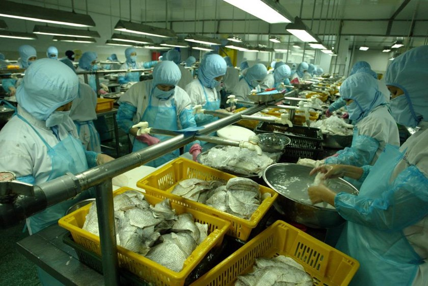 A seafood factory in Vietnam. Photo: Ngoc Thang